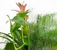 Rain Textured Glass Example Image